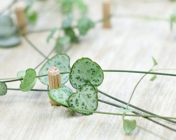 DIY Monogram auf Pflanzen und Holz als Geschenk für den Valentinstag, von Gingered Things