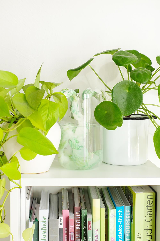 DIY Bewässerungssystem mit Zewa Wisch & Weg. Mehrere Pflanzen bewässern