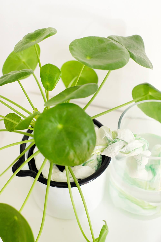 DIY Bewässerungssystem mit Zewa Wisch & Weg
