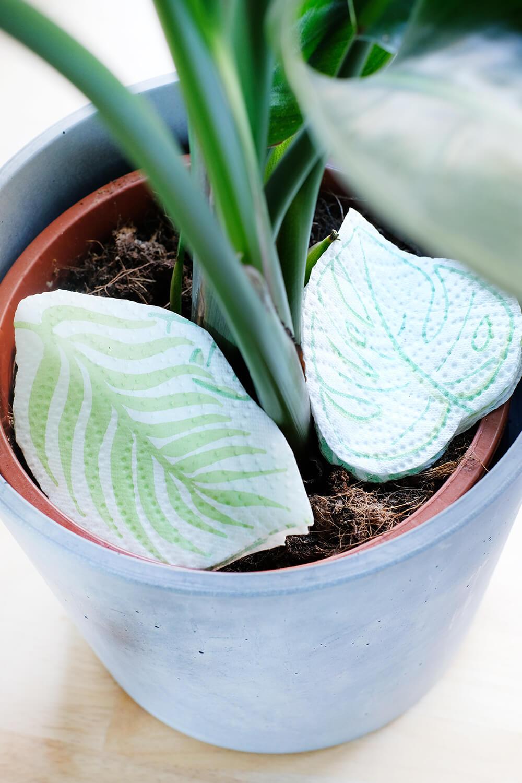 DIY Bewässerungssystem mit Zewa Wisch & Weg. Blätter ausschneiden