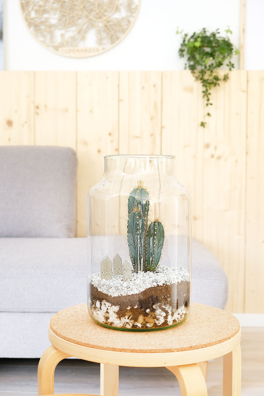Ein Kakteen Terrarium ist ein tolles Dekoelement.