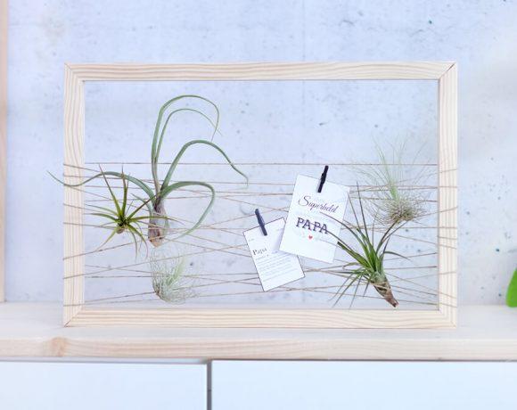 DIY Challenge, Pflanzen in Szene setzen - GEschenk zum Vatertag mit Tillandsien von Gingered Things