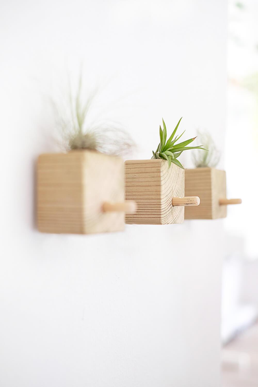 DIY Wandhaken aus Holz und Tillandsien